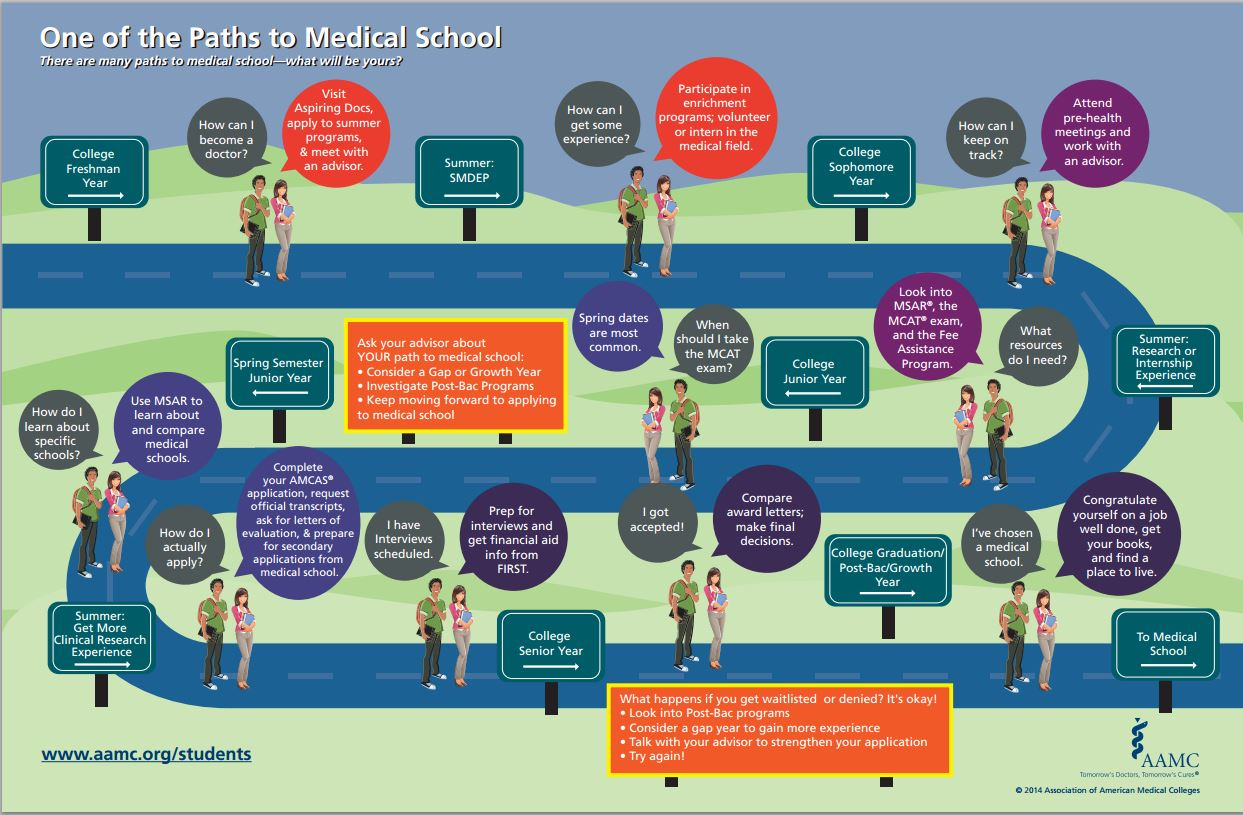 Infographic for Paths to Medical School