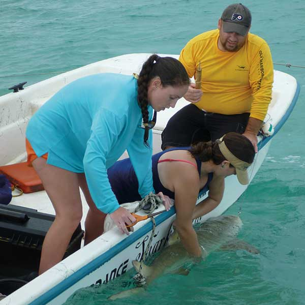 "Dr. Bryan Franks, ""Shark Guy,"" Launches Marine Biology Program"