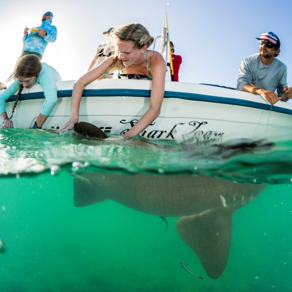 Studying Sharks in the Bahamas