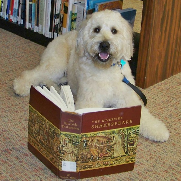 Riley the dog reading in the library