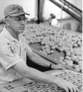 Plant worker at control panel with citrus on conveyor behind him